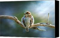Bird Art Canvas Prints - English Sparrow Canvas Print by Renee Dawson