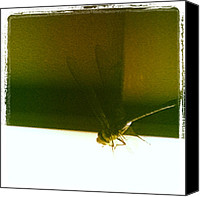 Dragonfly Canvas Prints - Enter The Dragonfly @rizness #dragonfly Canvas Print by Abid Saeed