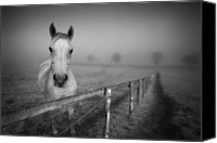 Domestic Animals Photography Canvas Prints - Equine Fog Canvas Print by Taken with passion
