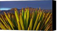 Cactus Canvas Prints - Espinas Diez Canvas Print by Skip Hunt