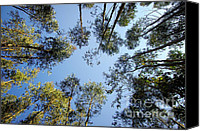 Breathe Canvas Prints - Eucalyptus Canvas Print by Carlos Caetano