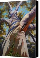 Graham Gercken Canvas Prints - Eucalyptus Tree Portrait Canvas Print by Graham Gercken