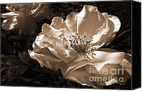 Umber Canvas Prints - Evening Glow Sepia Rose Canvas Print by Jennie Marie Schell