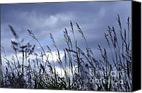 Blade Canvas Prints - Evening grass Canvas Print by Elena Elisseeva