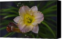 Macro Photography Canvas Prints - Evening Lily Canvas Print by Scott McGuire