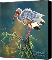 Ibis Canvas Prints - Everglades Vision Canvas Print by Deb LaFogg-Docherty