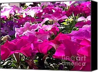 Vinca Flowers Canvas Prints - Everythings coming up Petunias Canvas Print by Elizabeth Coats