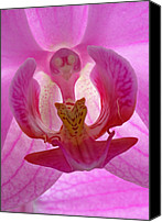 Orchidaceae Canvas Prints - Extremely Loud And Incredibly Close Canvas Print by Juergen Roth