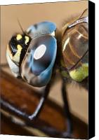 Dragon Photo Canvas Prints - Eye of a Dragonfly  Canvas Print by Gert Lavsen