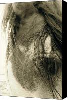 Wild Horse Pyrography Canvas Prints - Eye Of A Mustang Canvas Print by Tess  Marie