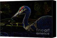 Bird Art Canvas Prints - Eye of the Crane Canvas Print by David Lee Thompson