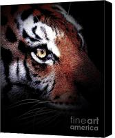 Animals Art Digital Art Canvas Prints - Eye of the Tiger 2 Canvas Print by Animals Art