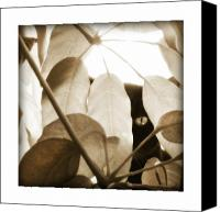 Kitty Canvas Prints - Eye Spy Canvas Print by Shevon Johnson