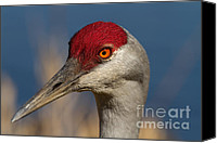 Sandhill Crane Canvas Prints - Eyen You Canvas Print by Reflective Moments  Photography and Digital Art Images