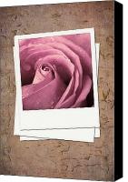 Postcard Photo Canvas Prints - Faded rose photo Canvas Print by Jane Rix