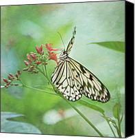 Botanical Beach Canvas Prints - Fairy Dance Canvas Print by Kim Hojnacki