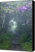 Craggy Canvas Prints - Fairy Path Canvas Print by Rob Travis