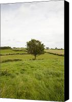 Fantasy Photo Canvas Prints - Fairy tree in Ireland Canvas Print by Ian Middleton