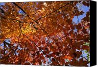 Fall Leaves Canvas Prints - Fall 2010 14 Canvas Print by Robert Ullmann