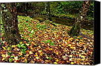Williams Canvas Prints - Fall along Middle Fork Canvas Print by Thomas R Fletcher