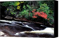 Swallow Canvas Prints - Fall Color Swallow Falls State Park Canvas Print by Thomas R Fletcher