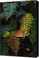 Mushroom Canvas Prints - Fall Ferns Canvas Print by Ron Jones