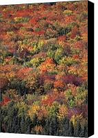 White Mountains Canvas Prints - Fall Foliage In New Hampshires White Canvas Print by Richard Nowitz