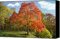 Buy Photos Online Canvas Prints - Fall Foliage Canvas Print by Steven  Michael