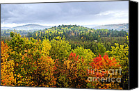 Forest Canvas Prints - Fall forest Canvas Print by Elena Elisseeva