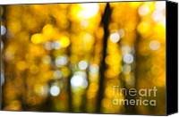 Forest Canvas Prints - Fall forest in sunshine Canvas Print by Elena Elisseeva