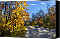 Forest Canvas Prints - Fall forest road Canvas Print by Elena Elisseeva