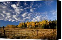 Featured Photo Canvas Prints - Fall in the Cariboo Canvas Print by Detlef Klahm