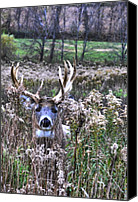 Whitetail Buck Canvas Prints - Fall King Canvas Print by Emily Stauring