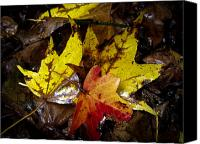 New Jersey Canvas Prints - Fall Leaves Canvas Print by Louis Dallara