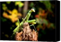 Outdoor Still Life Canvas Prints - Fall Mantis Canvas Print by Karen M Scovill