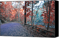 Chestnut Hill Canvas Prints - Fall on Forbidden Drive Canvas Print by Bill Cannon