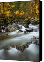Autumn Leaves Canvas Prints - Fall Surge Canvas Print by Mike  Dawson
