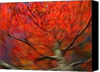 Trees Canvas Prints - Fall Tree Carousel Canvas Print by Juergen Roth