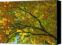 Trees Canvas Prints - Fall Tree Canvas Print by Juergen Roth