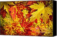 Leaf Pile Photo Canvas Prints - Fallen autumn maple leaves  Canvas Print by Elena Elisseeva