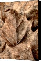 Dry Canvas Prints - Fallen Leaves I Canvas Print by Tom Mc Nemar