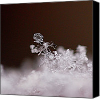 Winter Prints Canvas Prints - Falling Snowman Canvas Print by Rona Black