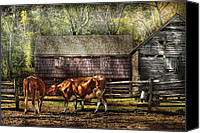 Bulls Photo Canvas Prints - Farm - Cow - A couple of Cows Canvas Print by Mike Savad