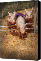 Pig Photo Canvas Prints - Farm - Pig - Getting past hurdles Canvas Print by Mike Savad