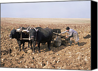 Cart Driving Canvas Prints - Farmer Fertilising A Field Canvas Print by Bjorn Svensson