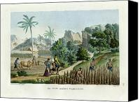 Guaham Canvas Prints - Farming on Guam Island Canvas Print by d apres Pellion