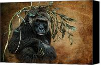 Gorilla Mixed Media Canvas Prints - Fashion Sense Canvas Print by Richard Shelton
