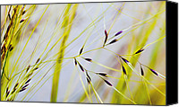 Mariola Szeliga Canvas Prints - Feather Grass Canvas Print by Mariola Szeliga