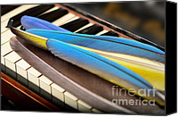 Keyboard Canvas Prints - Feathering the Keys Canvas Print by Wayne Nielsen