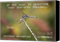 Dragonfly Art Canvas Prints - Feel Young Again Canvas Print by Carol Groenen